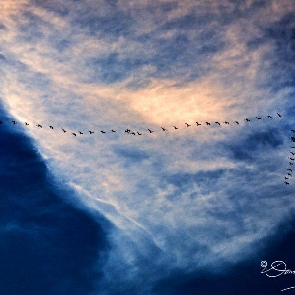 Italy Birds in Flight
